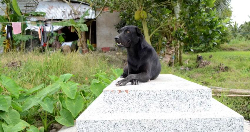 La perra Mino lleva tres de sus cuatro años de vida pegada a la tumba de su dueño, un niño de dos años que murió ahogado en una zanja cercana a su casa, en el sur de Vietnam, y del que nunca se separaba durante el año en que convivieron.