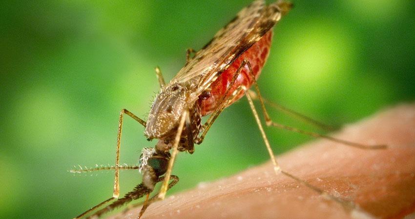 Los casos de malaria en Nicaragua experimentan un aumento del 60% y las muertes por neumonía un 7%, según datos del Gobierno.
