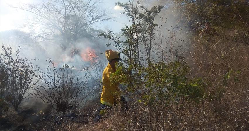 Incendio forestal en El Tular. Foto: Juan Fco. Dávila/Radio ABC Stereo