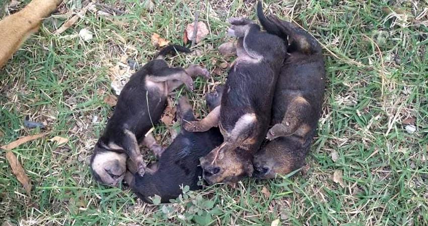 Los pequeños tenían 4 días de nacidos. Foto: Juan Fco. Dávila/Radio ABC Stereo