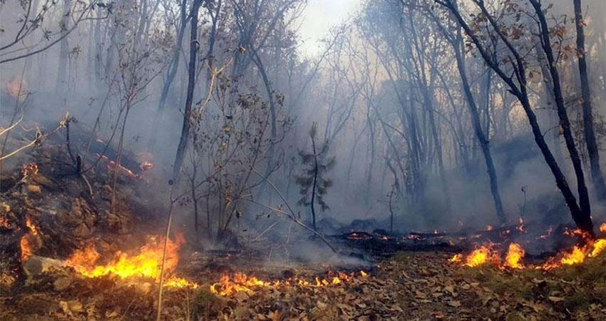 En lo que va de este año se han perdido más de 123 hectáreas de bosques en esta región a causa del fuego.