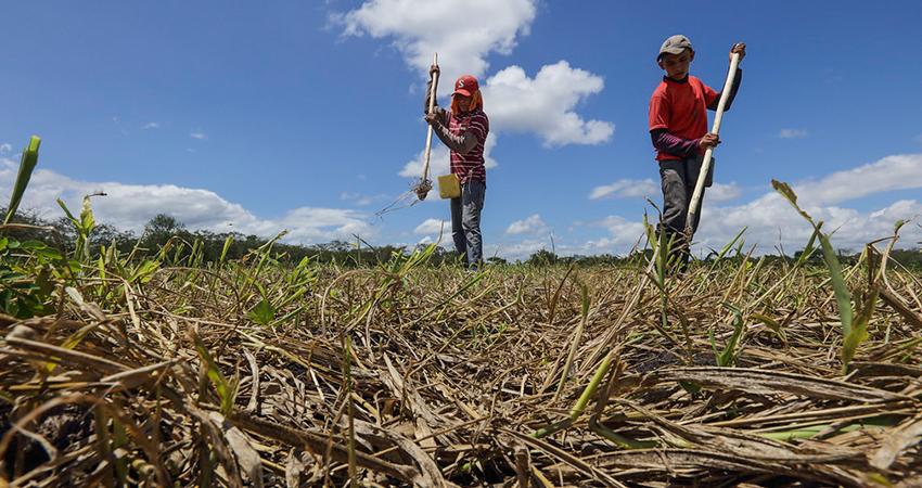 Granos como el frijol y maíz están siendo más demandados. Foto: Roberto Mora/Radio ABC Stereo