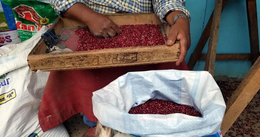 Una vez más el precio del frijol podría aumentar ante los problemas para la siembra de primera, según comerciante y acopiador de Estelí.
