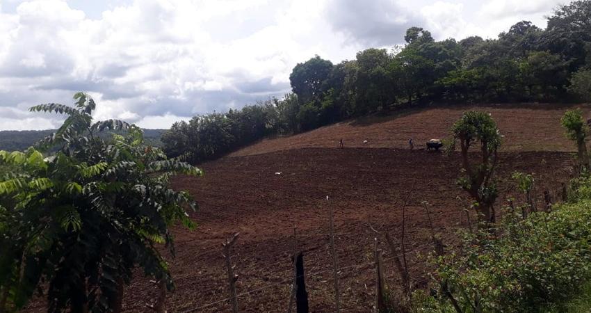 El campesinado está aprovechando las lluvias para sembrar. Foto: Denis García/Radio ABC Stereo