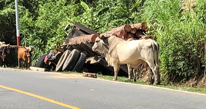 Al camión cargado de madera presuntamente le fallaron los frenos, provocando que el conductor perdiera el control.