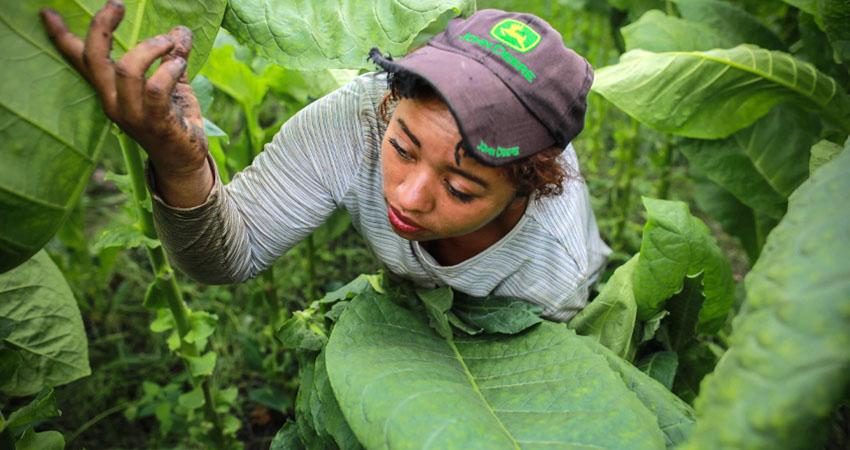 Con este trabajo llevan el sustento al hogar. Foto: AFP
