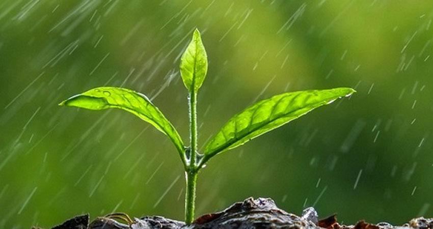 La falta de lluvia agobia a los productores.