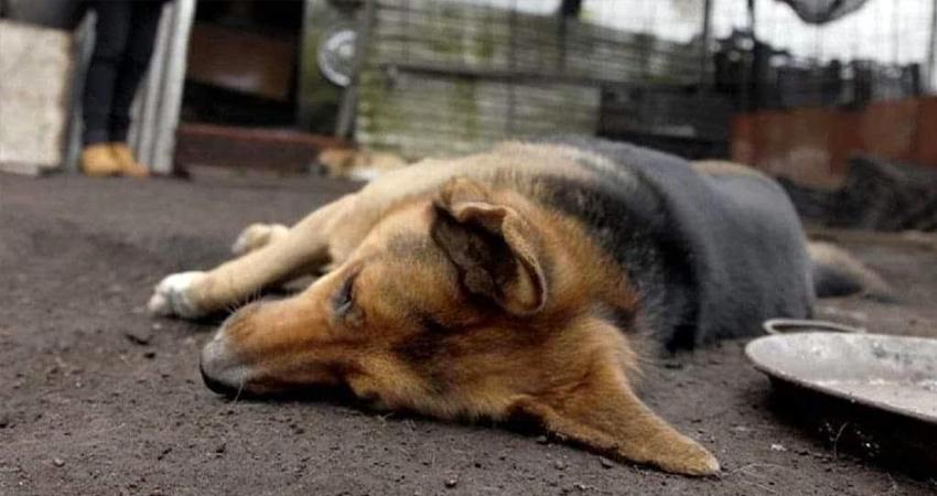 Las mascotas muertas fueron halladas en los barrios Primero de Mayo, José Benito Escobar y Óscar Turcios. Foto de referencia.